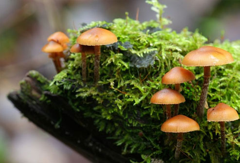 Some wild mushrooms have toxins like agaritine and amatoxin.