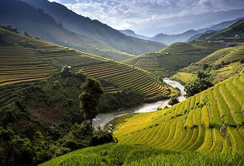 Rice is grown on every continent except Antarctica.