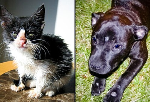 Pets can develop ringworm and spread it to people.