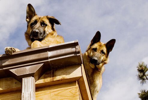 Dogs on a roof.