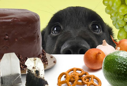 Puppy Looking at an Array of Food.
