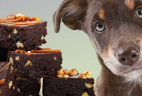 Puppy Looking at Stack of Brownies.