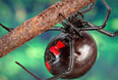Bad Bugs: Identify Bugs and Their Bites
