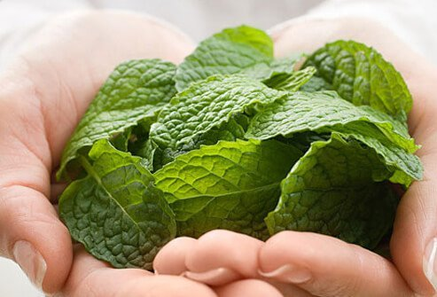 Woman holding mint leaves.