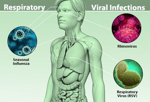Respiratory viral infections affect the lungs, nose, and throat.