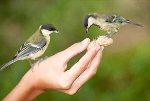 There is no evidence a person can get West Nile virus by handling infected birds